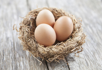nid d œufs bio écologie
