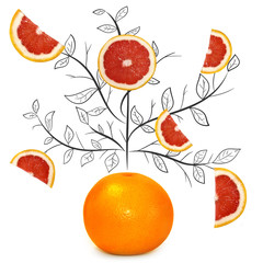 Fruit composition with fresh grapefruit and cartoon cute doodle drawing tree branches with leaves on white background. Creative minimalistic food concept.