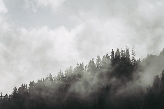 Paysage de montagne, vue sur foret de sapin