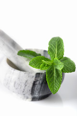 the branch of fresh mint lies in a marble mortar on a white background