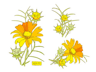 Stylized vector yellow flowers set