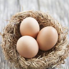 nid d œufs de poule