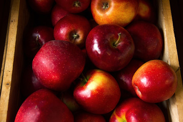 a few red orange macro apples with shadow  in a wooden box