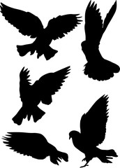 black pigeon isolated five flying silhouettes
