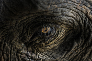 eye of a elephent