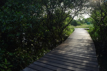 Jogging track in mangrove forest