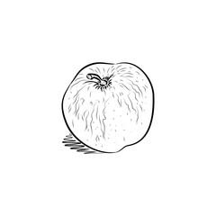 Sketch of apple.