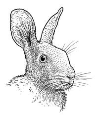 Rabbit head portrait illustration, drawing, engraving, ink, line art, vector