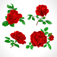 Red roses with buds and leaves vintage  on a white background set three vector illustration editable hand draw