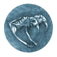 Anatomical drawing. Snake skull. Animals anatomy.