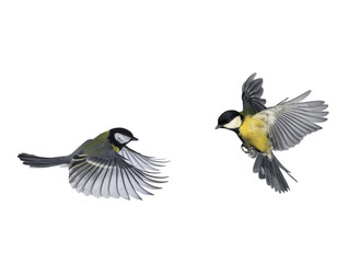 Printed roller blinds Bird pair of birds blue Tits flying to meet wings and feathers on white isolated background
