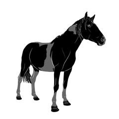 Векторный рисунок. Силуэт пятнистой лошади