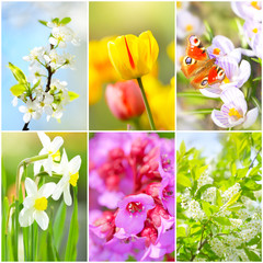 Collage. Spring flowers