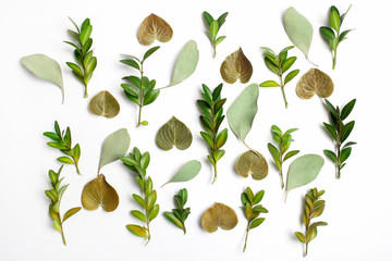 group of green leaf background. Flat lay