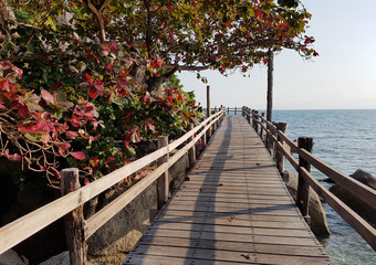 Picture of wooden bridge, trees by sea coast, blue sky