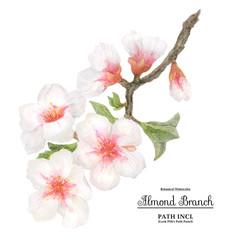 Watercolor flowering almond branch
