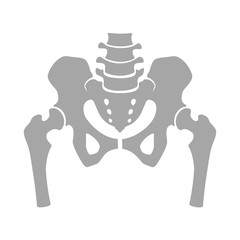 Fragment of the structure of the human skeleton. Pelvic girdle and thighs. Silhouette. Icon. Sign.