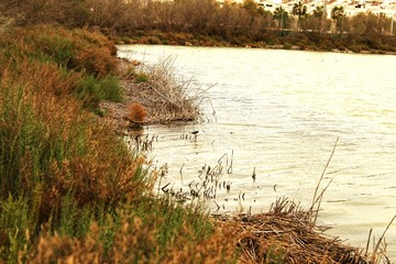 Wetlands of Santa Pola