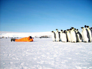 A researcher from the polar station is studying penguins. Antarctic.