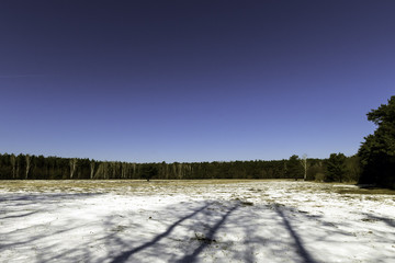 Winter in Kampinos National Park - Poland
