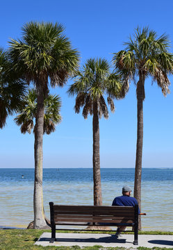Older man relaxing at beach, sitting on bench near palm trees.