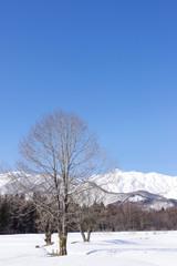 雪景色の白馬村と北アルプス