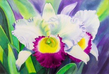 Paintings watercolor on paper original realistic white color of orchid flowers