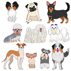 group of small dogs hand drawn