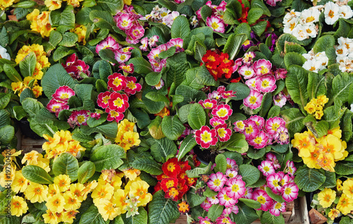 Beautiful Spring Flowers For Sale At Street Market Stock Photo And