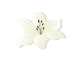 White with a yellow shade of lily. flower icon. Vector design.