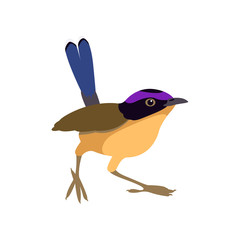redstart  bird vector illustration flat style
