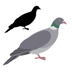 pigeon dove vector illustration flat style  silhouette