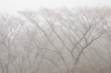 Fototapeta 霧氷の山地