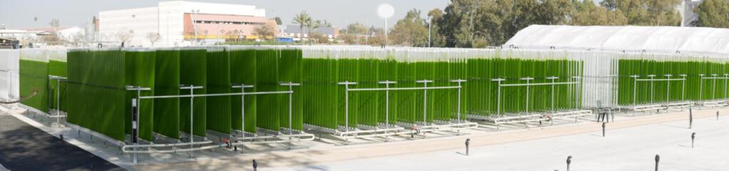 Algae growing plant