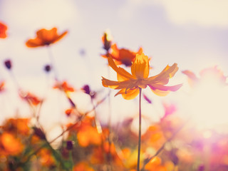 travel and adventure concept from close up beautiful flower field with group of yellow daisy or other flower with soft focus background on winter to summer season