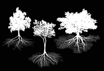 three isolated on black trees with roots silhouettes