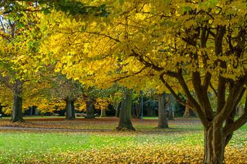 Herbst im Alten Friedhof in Heilbronn