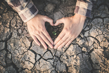 Human hand protect little green plant on crack dry ground, concept drought and save the world