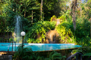 Jungle Pool Forest