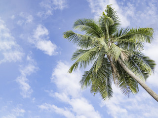 Coconut trees in the tourist attractions by the sea.