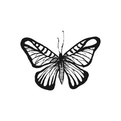 Butterfly sketch. Hand drawn vector illustration
