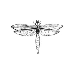 Dragonfly sketch. Hand drawn vector illustration