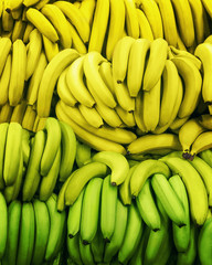 Bananas in boxes Green and ripe yellow bananas are lying in rows on the market Top view photo pattern
