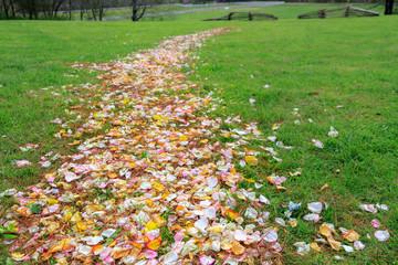 Flower Petal Path