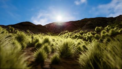 Semi Desert Arid Landscape
