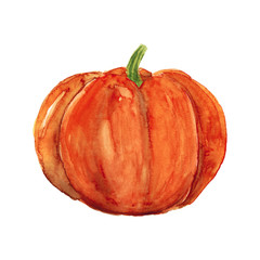 Watercolor hand drawn sketch illustration of pumpkin isolated on white