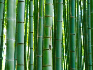 Bambus Hintergrund Wald Stangen