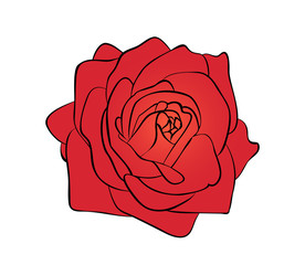 Vector illustration, flat bright red rose flower isolated on white background