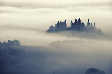 Beautiful foggy sunrise in Tuscany, Italy with vineyard and trees. Natural misty background