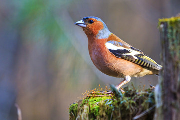 beautiful forest bird sitting on a stump
